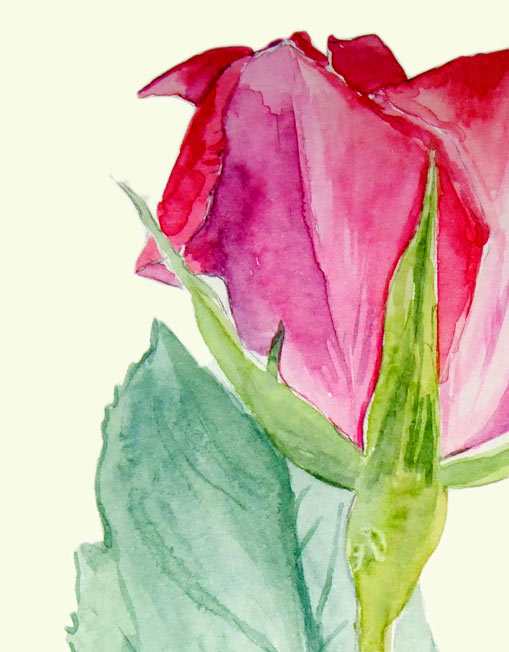 Melanie Chan, Rose 2 (detail) (2007, watercolours on paper, 21 x 42cm.) Image © the artist. Permission to use image obtained from the artist.